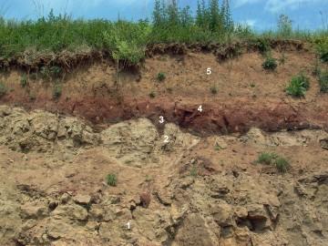 Zechstein im Steinbruch Hufgard auf der Feldkahler Höhe westlich des Gräfenberges. 1: Zechstein-Dolomit des z1, 2: Karstschlotte (Paläokarst) des z2, 3: tonig-bituminose Füllung der Karstschlotte, 4: eisenschüssige Tonsteinlagen des z3+z4, 5: Lößauflage bzw. Aufschüttung.
