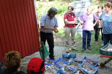 Die gewaschenen und zum Trocknen ausgelegten Funde finden bei Führungen wie auch vorbeikommenden Wanderern großes Interesse.