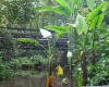 Dschungel unter Glas: Der Burgers' Zoo bei Arnheim (NL) verfügt unter anderem über ein riesiges Tropenhaus. Mit ihm wurde eine südostasiatische Landschaft in die Niederlande übertragen.