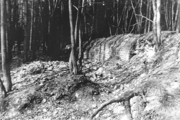 "Die Reste der Ringmauer des ""Alten Schlosses"" bei Kleinwallstadt um 1968 (Foto: Gudrun Berninger, Klingenberg)"