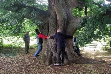 Die Michelriether Linde ist einer der schönsten freistehenden Bäume im Spessart. Die weit ausladenden Äste stützen sich am Boden auf. Sanierungsmaßnahmen stellen den Erhalt dieses Baumriesen mit einem Umfang von 5,21 m sicher. Von Fachleuten wird das seit 1912 ausgewiesene Naturdenkmal auf ein Alter von rund 300 Jahren geschätzt.