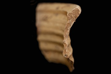Das Fragment der Mündung einer Becherkachel im Profil
