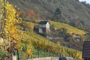 Weinberg bei Karlstadt. Der Weinbau formte die Landschaft vollständig um. Der darüber liegende Hang war zu steil für den Anbau von Reben. Er blieb vom Einfluß des Menschen weitgehend verschont und ist heute Naturschutzgebiet.