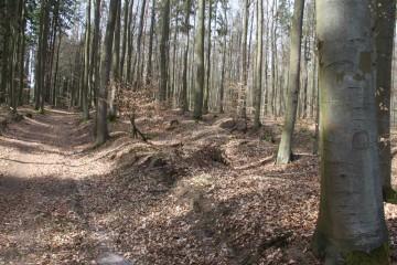 Als Hohlwege mit mehreren Trassen ist die Birkenhainer Straße wie hier, östlich des Klosters Elisabethenzell, auf weiten Strecken im Spessart noch erkennbar.