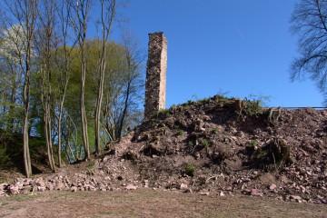 Der Burghügel wurde anlässlich der Grabungen vom Robinienbewuchs befreit.