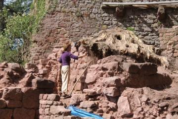 Der Wurzelstock kann noch nicht abgetragen werden, da sonst ein Teil der Mauer einstürzen würde.