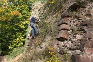 Der Bewuchs der südlichen Palasmauer muss zwecks Dokumentation der Mauerstrukturen beseitigt werden.