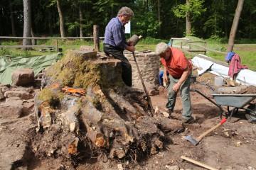 """Ingbert und Waldemar haben an der """"Mega""""-Buche schon einige Wurzel gekappt. Dennoch rührt sich der Baumstamm keinen Zentimeter."""
