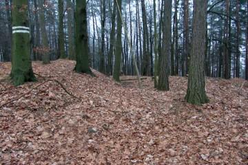 """Von zahlreichen Niederadelsburgen im Spessart haben sich – wie auf der """"Alten Burg"""" auf dem Reuschberg bei Schöllkrippen – kaum noch nennenswerte Spuren der ursprünglichen Wehranlage erhalten."""