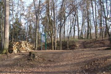 Vor der Grabung musste das Bodendenkmal erst einmal von einem Gutteil seines Bewuchses befreit werden.