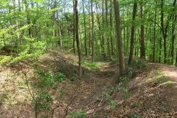 Der milde Frühling brachte Farbe in den Wald.