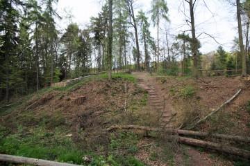 Vor den Grabungsarbeiten wird der Burgberg von Bewuchs gesäubert.