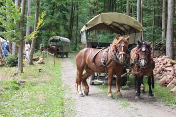 Die Besucher werden am ersten Tag des Grabungsfestes mit Kutschen zur Grabungsstelle gebracht.