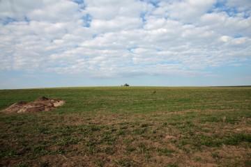 Das Areal der Wüstung Stubach wird seit kurzem ackerbaulich bewirtschaftet. Blickrichtung West.