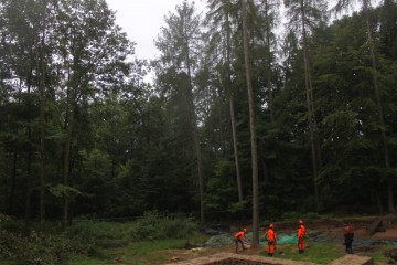 """""""Baum fällt!"""" Die letzten Bäume auf dem Parkgelände wurden heute morgen von den Forstarbeitern gefällt."""