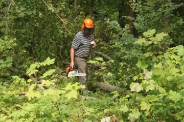 Ein Männlein sägt im Walde... Bruno räumt nach und nach die Giebel der kürzlich gefällten Bäume weg.