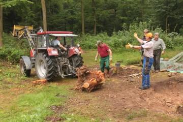 Geschafft! Julius konnte den freigelegten Baumstumpf schließlich mit dem Traktor wegziehen.