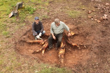 """Wie die Großwildjäger posieren Friedrich und Ingbert auf dem nächsten Opfer, einem """"Waldoktopus""""."""