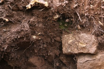 Ein Zaunkönig hatte sich für sein Nest ausgerechnet ein Grabungsprofil ausgesucht.