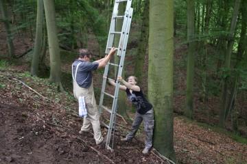 Das Fotografieren mit ausgefahrener Leiter und schrägen Bäumen