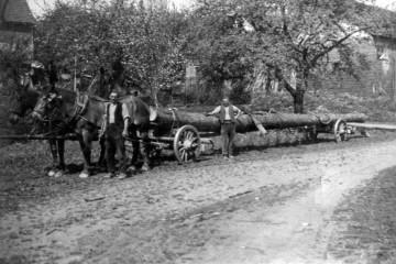 Waldarbeiter bei der Holzabfuhr