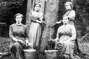 Frauen beim Harzzapfen, um 1916