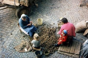 Vor der Feldarbeit: Die Kartoffeln wurden vor dem Stecken nach Größe sortiert.