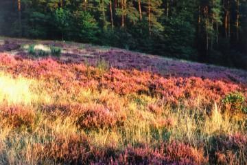 Schäferei und Heideflächen