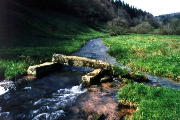 Wässerwiesen