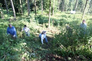 Bevor man mit Schippe und Spaten loslegen kann, muss erst das Unterholz beseitigt werden. Besonders reizvoll kann dabei der Umgang mit Brenesseln sein.
