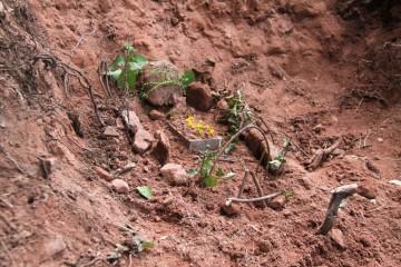"""Ein bei den Grabungsarbeiten verunglückter Käfer wurde von den Jungarchäologen """"stilecht"""" beigesetzt."""