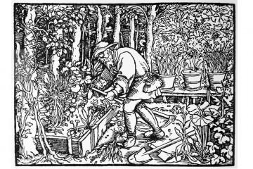 Gärtner vor einem Gartenbeet, Holzschnitt von Hans Weiditz von 1571