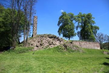 Vor der Grabung war es notwendig, den Hang von Akaziengestrüpp und Brombeerranken zu befreien.